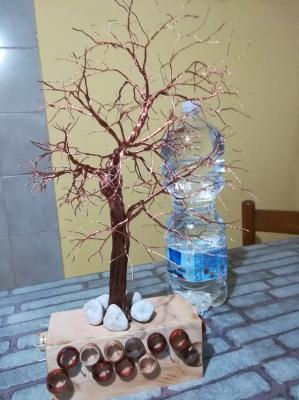 albero_55