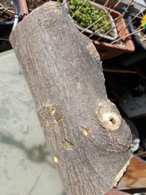 legno_2